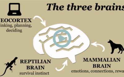 [Thérapie Imago] Connaître nos 3 cerveaux