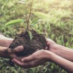 2 mains se joignent avec un arbuste à planter