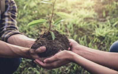Vivre une relation de couple plus écologique : comment faire ?